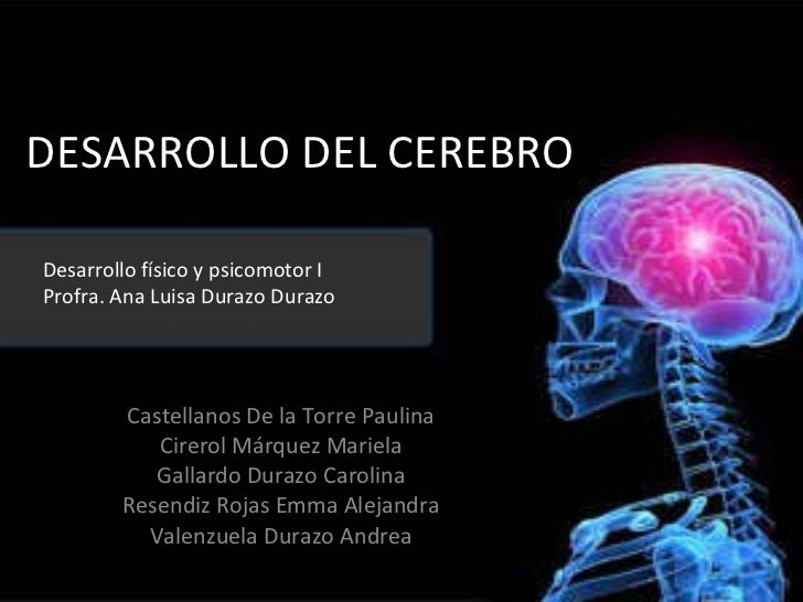 DESARROLLO DEL CEREBRO Castellanos De la Torre Paulina Cirerol Márquez Mariela Gallardo Durazo Carolina Resendiz Rojas Emm...