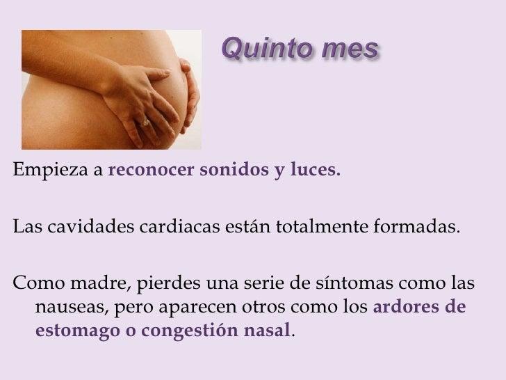 Desarrollo del embarazo mes a mes - Feto de 4 meses fotos ...