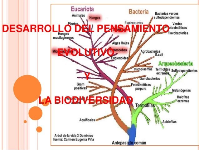 DESARROLLO DEL PENSAMIENTO EVOLUTIVO Y LA BIODIVERSIDAD