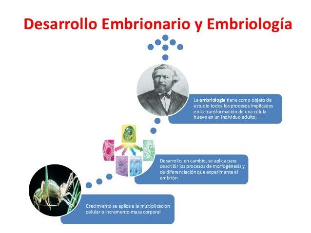 Desarrollo Embrionario y Embriología Crecimiento se aplica a la multiplicación celular o incremento masa corporal Desarrol...