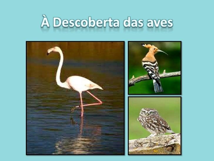 À Descoberta das aves