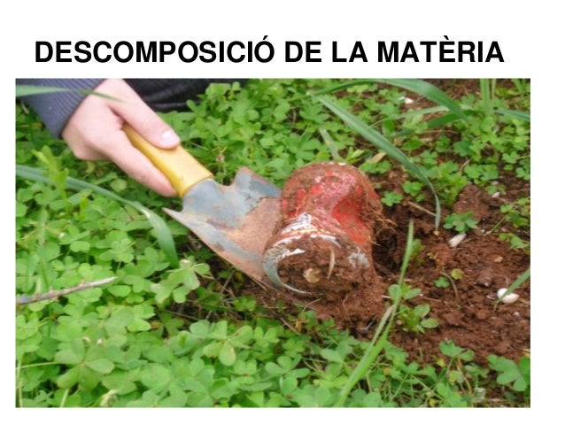 DESCOMPOSICIÓ DE LA MATÈRIA