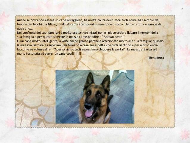 Descrizione pastore tedesco for Casa progetta il trotto del cane