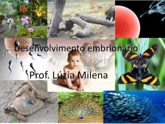 Desenvolvimento embrionário Prof. Lúzia Milena