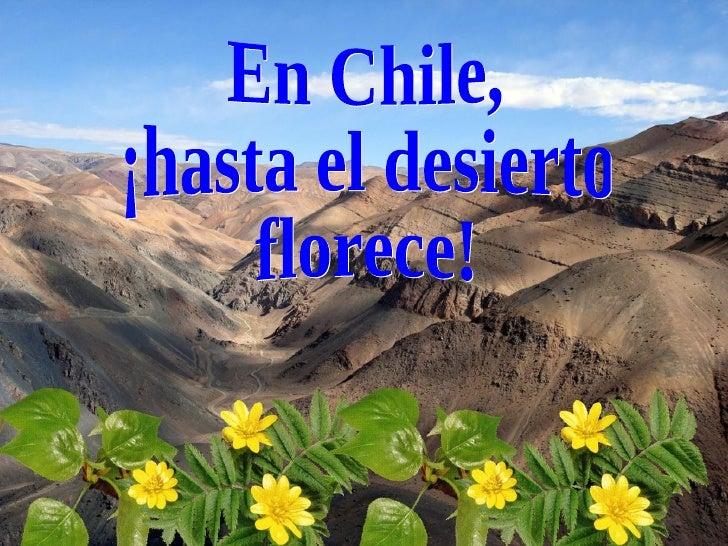 En el desierto de Atacama, el más árido del mundo, ubicado al norte de       Chile, se produce un fenómeno climático espec...