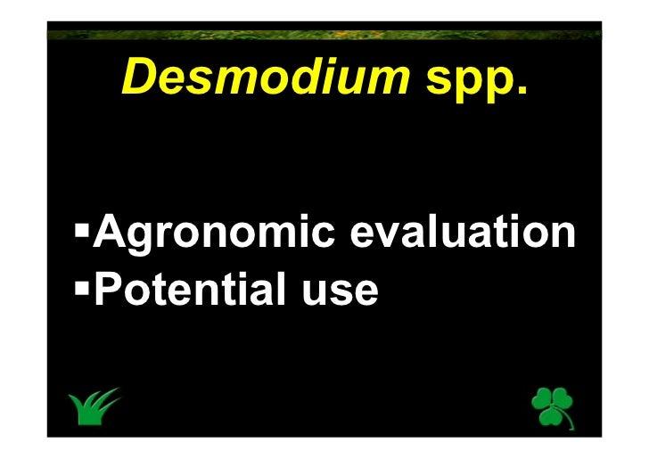 Desmodium Spp.