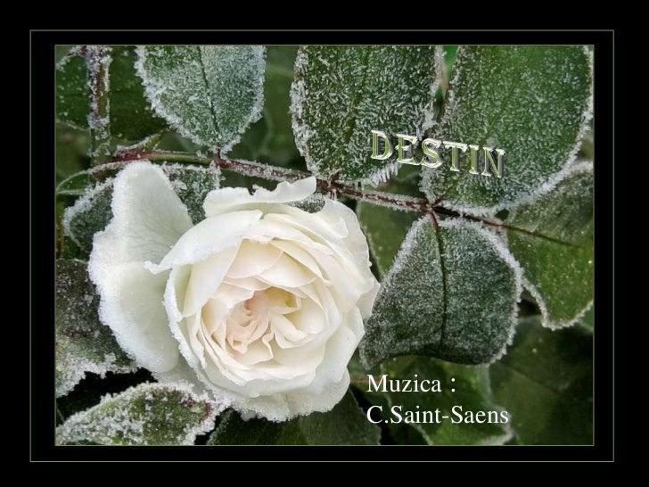 Muzica :C.Saint-Saens