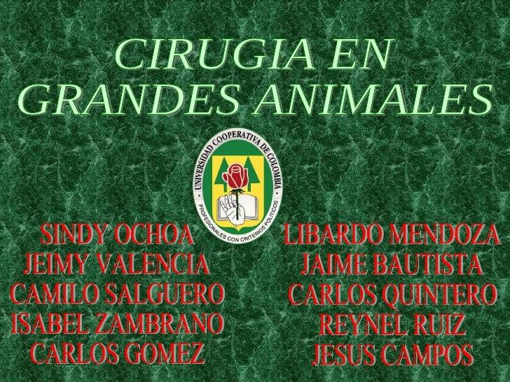 CIRUGIA EN  GRANDES ANIMALES SINDY OCHOA JEIMY VALENCIA CAMILO SALGUERO ISABEL ZAMBRANO CARLOS GOMEZ LIBARDO MENDOZA JAIME...