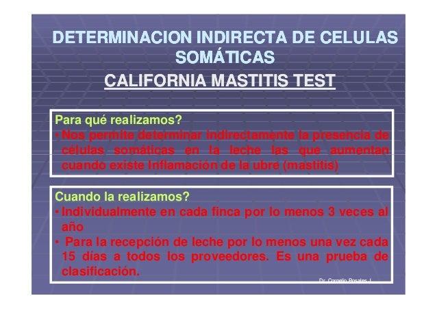 DETERMINACION INDIRECTA DE CELULASDETERMINACION INDIRECTA DE CELULAS SOMÁTICASSOMÁTICAS DETERMINACION INDIRECTA DE CELULAS...