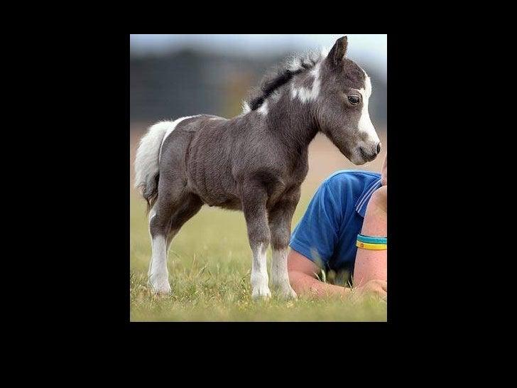 De trés trés belles photos d ' animaux !!