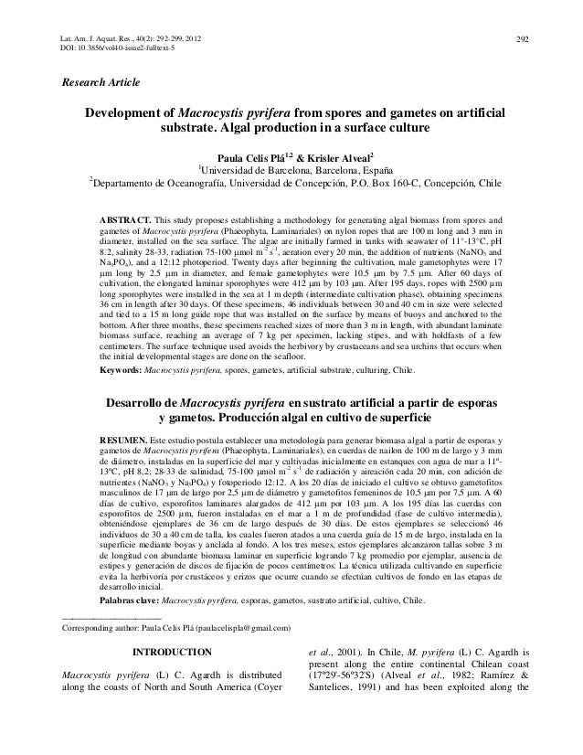 Development of macrocystis pyrifera from spores and gametes on artificial