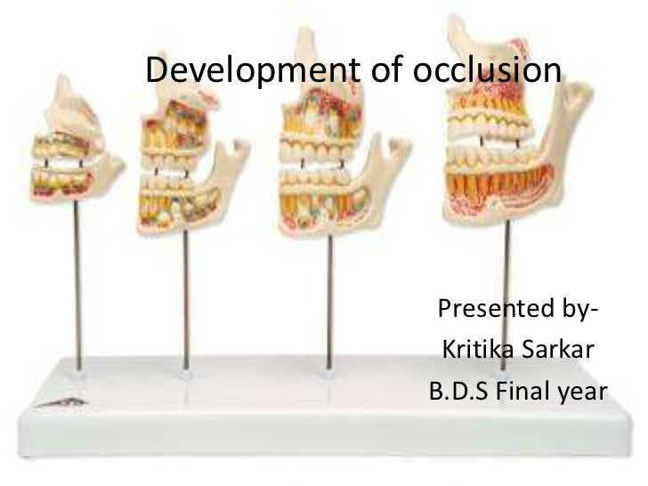Development of occlusion                 Presented by-                 Kritika Sarkar                B.D.S Final year