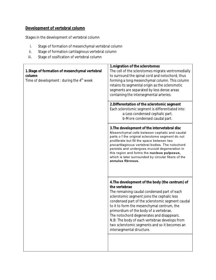 Development of vertebral column  Stages in the development of vertebral column     i.   Stage of formation of mesenchymal ...