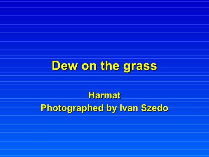 Dew on the grass Harmat Photographed by Ivan Szedo