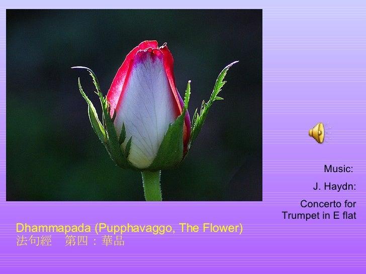 Dhammapada (Pupphavaggo, The Flower)  法句經  第四:華品 Music:  J. Haydn: Concerto for Trumpet in E flat