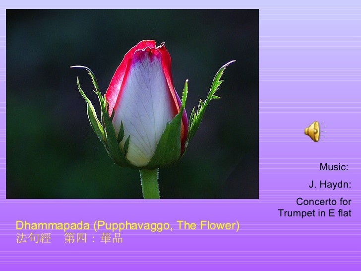 The Flower ( In English & Chinese )
