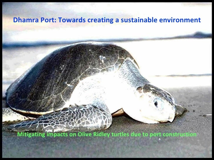 Dhamra Port: Towards creating a sustainable environment <ul><li>Mitigating impacts on Olive Ridley turtles due to port con...