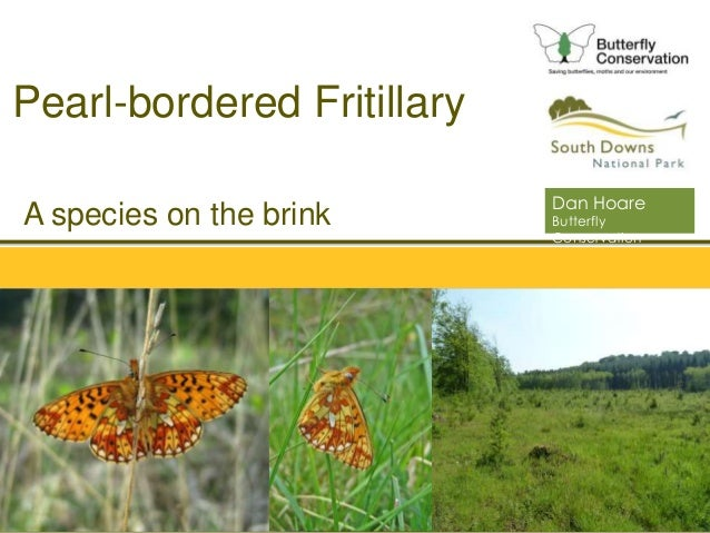 South Downs National Park Authority A species on the brink Pearl-bordered Fritillary Dan Hoare Butterfly Conservation