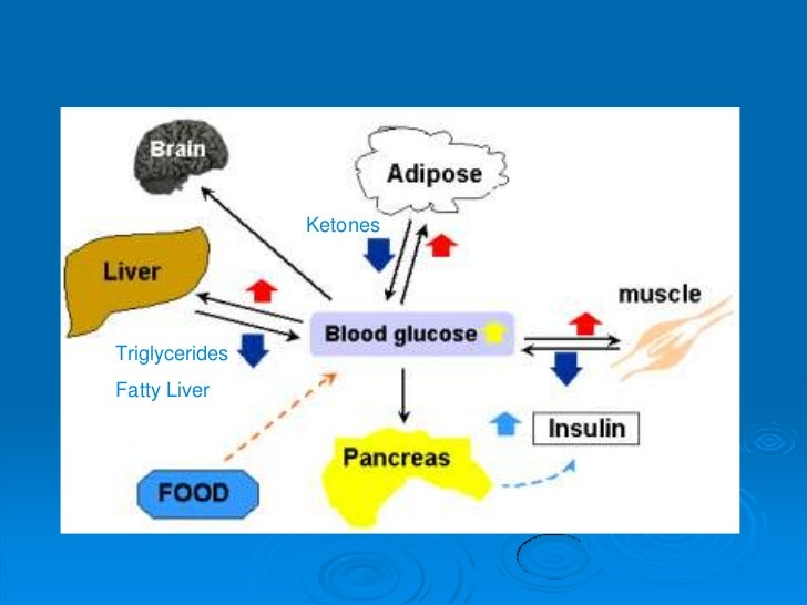 anabolic pathways of metabolism are pathways that quizlet