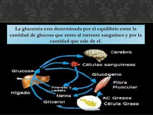 Fisiopatologia Diabetes mellitus