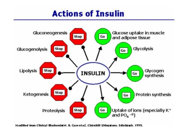 diabetes mellitus type 1 thesis This research paper is on diabetes mellitus people with type 1 diabetes are most often identifying as children or young adults and produce.