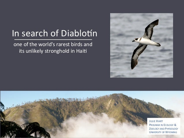 In  search  of  Diablo0n   one  of  the  world's  rarest  birds  and   its  unlikely  stronghold...