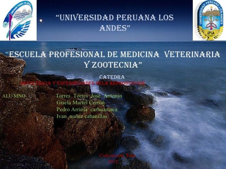 """""""UNIVERSIDAD PERUANA LOS                          ANDES""""""""ESCUELA PROFESIONAL DE MEDICINA VETERINARIA                Y ZOOT..."""