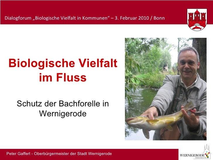 Biologische Vielfalt im Fluss Schutz der Bachforelle in Wernigerode Peter Gaffert - Oberbürgermeister der Stadt Wernigerode