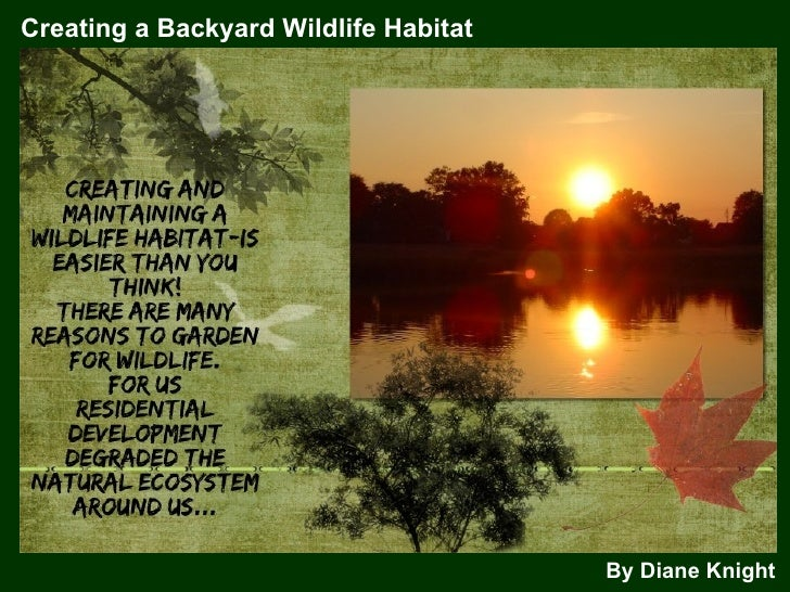 Creating a Backyard Wildlife Habitat By Diane Knight