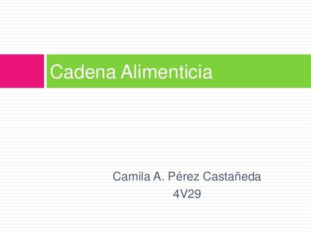 Cadena Alimenticia Camila A. Pérez Castañeda 4V29