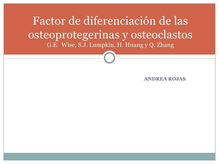 <ul><li>ANDREA ROJAS </li></ul>Factor de diferenciación de las osteoprotegerinas y osteoclastos G.E.  Wise, S.J. Lumpkin, ...