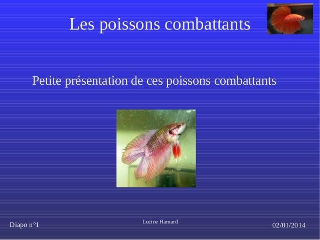 Les poissons combattants Petite présentation de ces poissons combattants  Diapo n°1  Lucine Hamard  02/01/2014