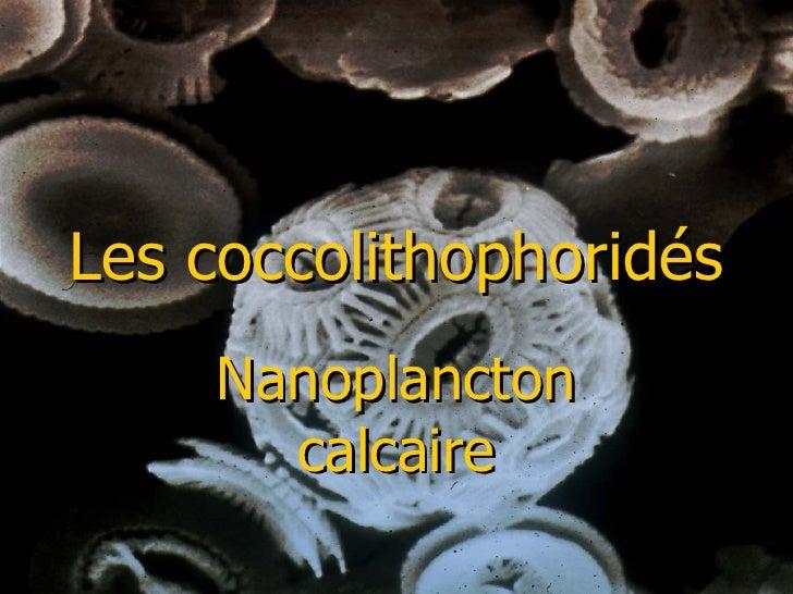 Les coccolithophoridés Nanoplancton calcaire