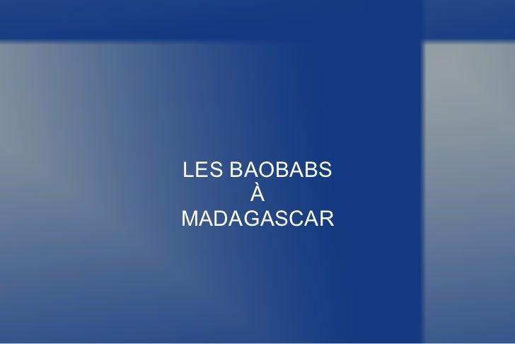 LES BAOBABS À MADAGASCAR