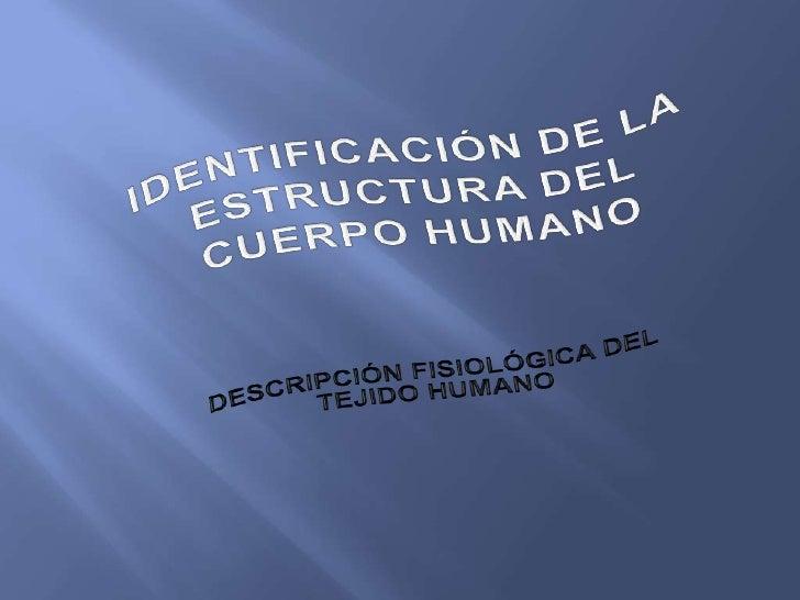 DESCRIPCION FISIOLOGICA DEL TEJIDO HUMANO