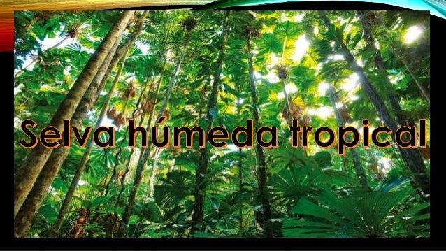 SELVA TROPICAL La selva tropical es la selva o bosque denso de clima trópica húmedo que se caracteriza por unas elevadas p...