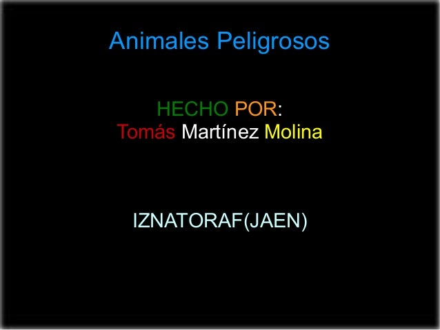 HECHO POR: Tomás Martínez Molina IZNATORAF(JAEN) ANIMALES PELIGROSOS Animales Peligrosos