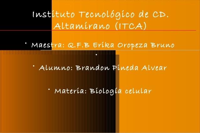 Instituto Tecnológico de CD. Altamirano (ITCA) • Maestra: Q.F.B Erika Oropeza Bruno • • Alumno: Brandon Pineda Alvear • Ma...