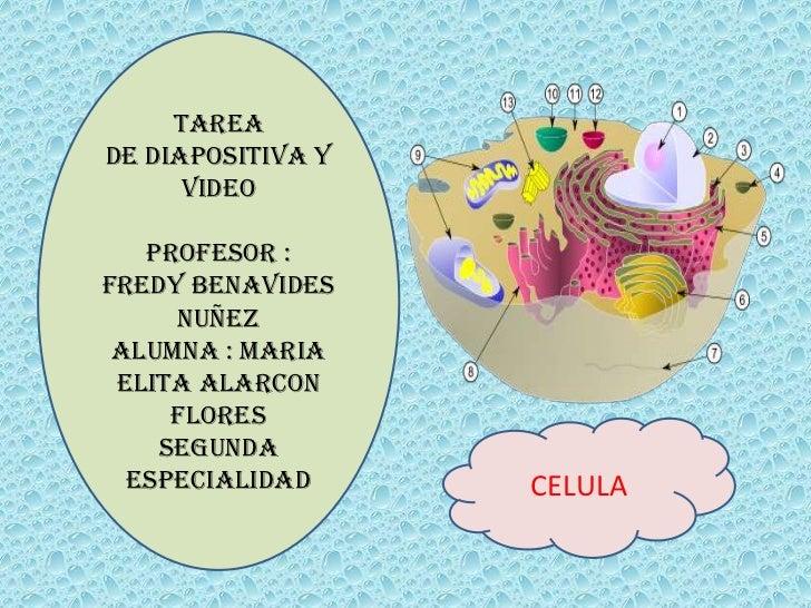 Diapositiva la celula, estructura, clases  y organelas