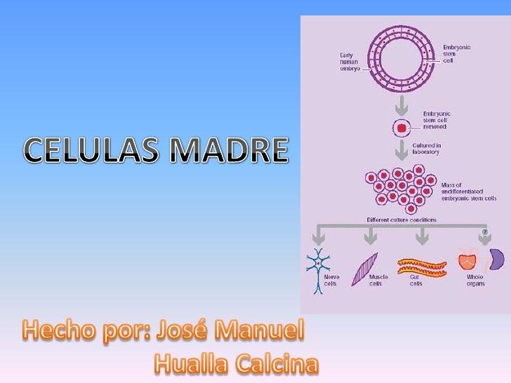 CÉLULAS MADRE           Troncales, Estaminales o Stem CellsCélulas capaces de:   • Generar como descendencia células hijas...