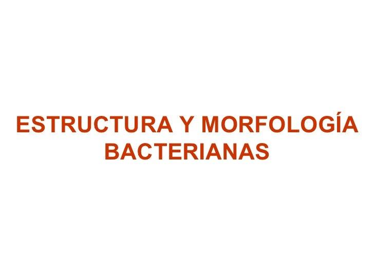 ESTRUCTURA Y MORFOLOGÍA BACTERIANAS