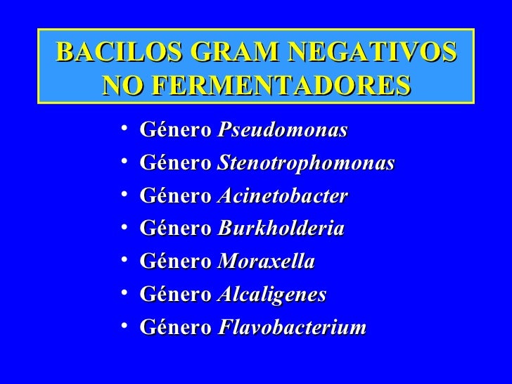BACILOS GRAM NEGATIVOS NO FERMENTADORES <ul><li>Género  Pseudomonas </li></ul><ul><li>Género  Stenotrophomonas   </li></ul...