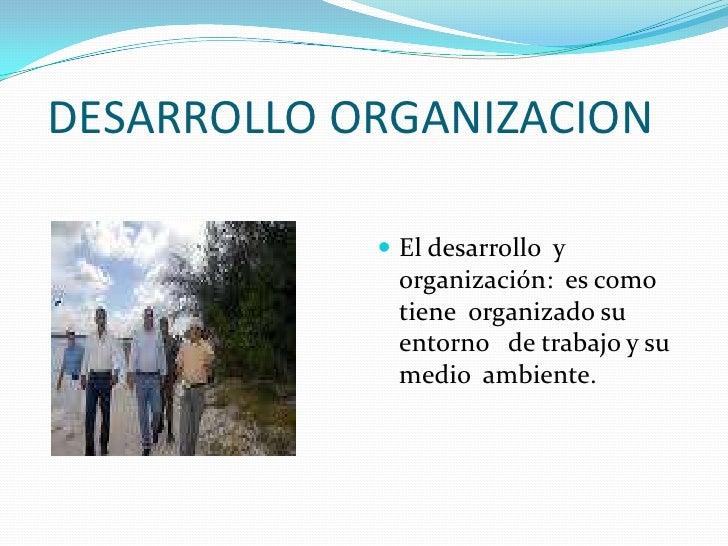 DESARROLLO ORGANIZACION<br />El desarrollo  y organización:  es como tiene  organizado su entorno   de trabajo y su medio...
