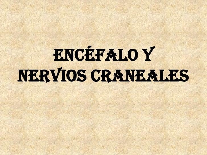 ENCÉFALO Y NERVIOS CRANEALES