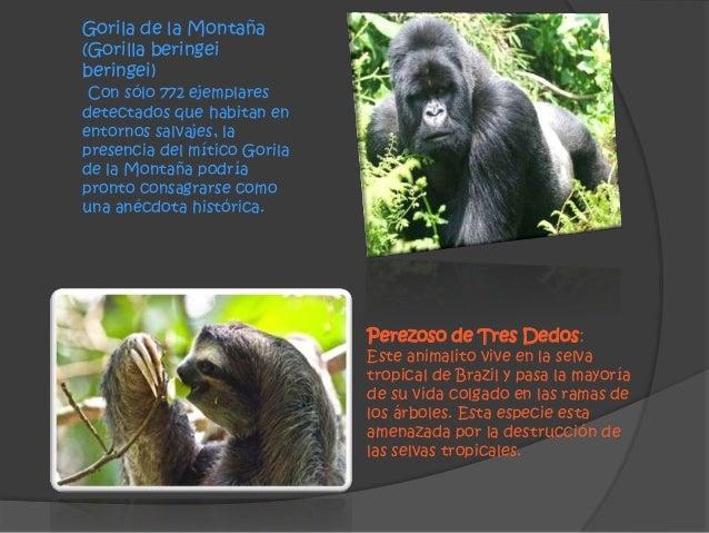 diapositivas de la extincion de animales