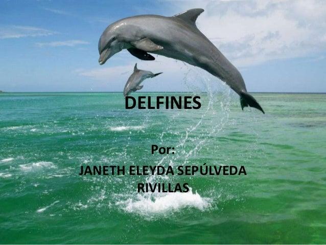 DELFINES Por: JANETH ELEYDA SEPÚLVEDA RIVILLAS