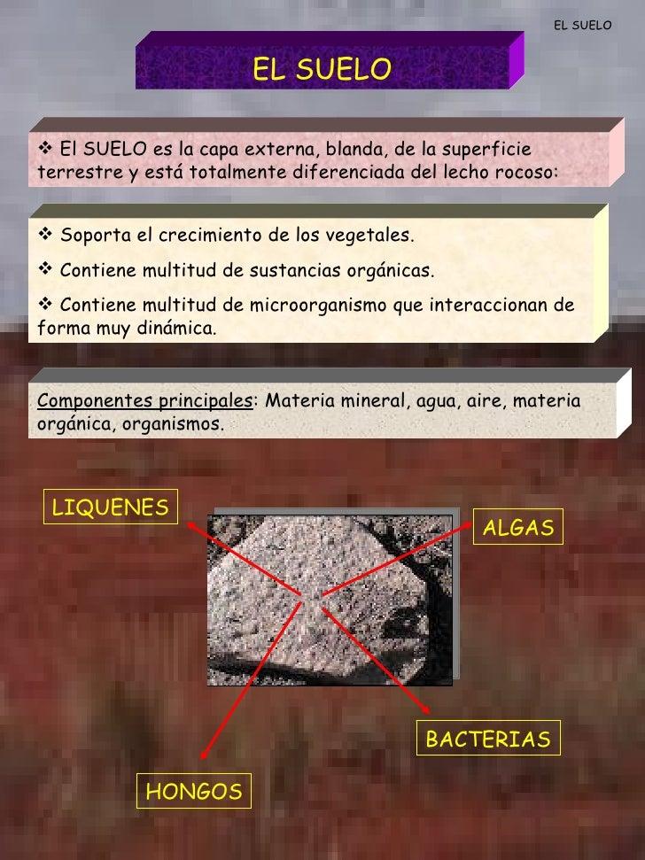 EL SUELO EL SUELO <ul><li>El SUELO es la capa externa, blanda, de la superficie terrestre y está totalmente diferenciada d...