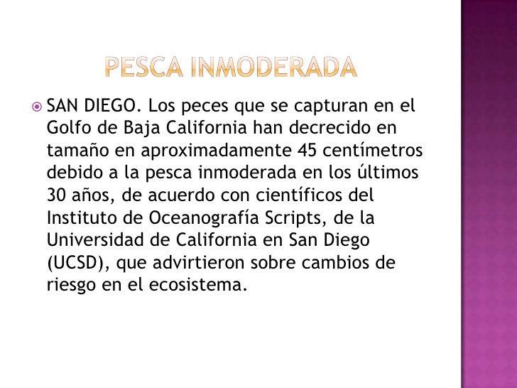 PESCA INMODERADA<br />SAN DIEGO. Los peces que se capturan en el Golfo de Baja California han decrecido en tamaño en aprox...