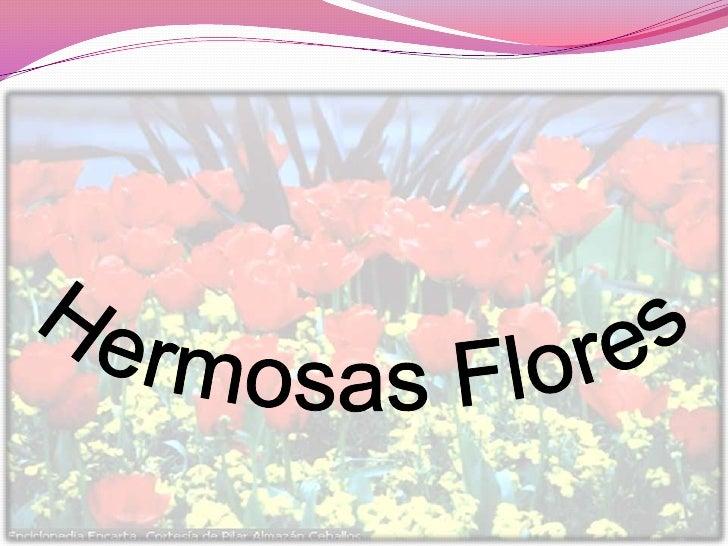 Diapositivas hermosas flores