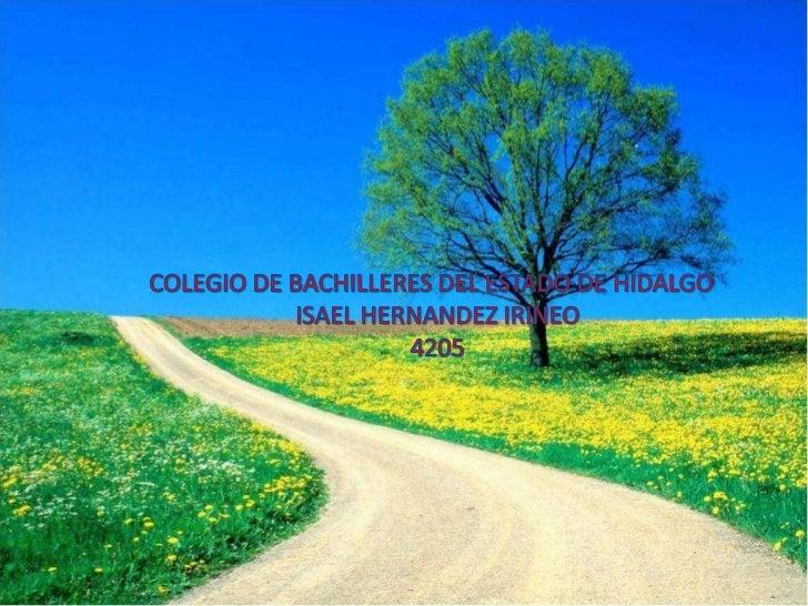 COLEGIO DE BACHILLERES DEL ESTADO DE HIDALGO<br />ISAEL HERNANDEZ IRINEO<br />4205<br />